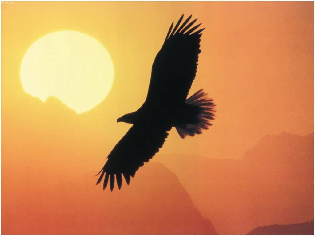 Eagle flying with sunset behind femostration the plan for shifting to a Harmonious Earth