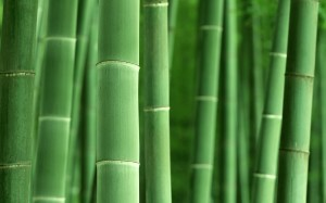 Bright picture of green bamboo trees