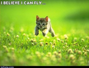 Kitten running and jumping Create New beliefs that it can fly