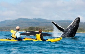 Kayaking with whale